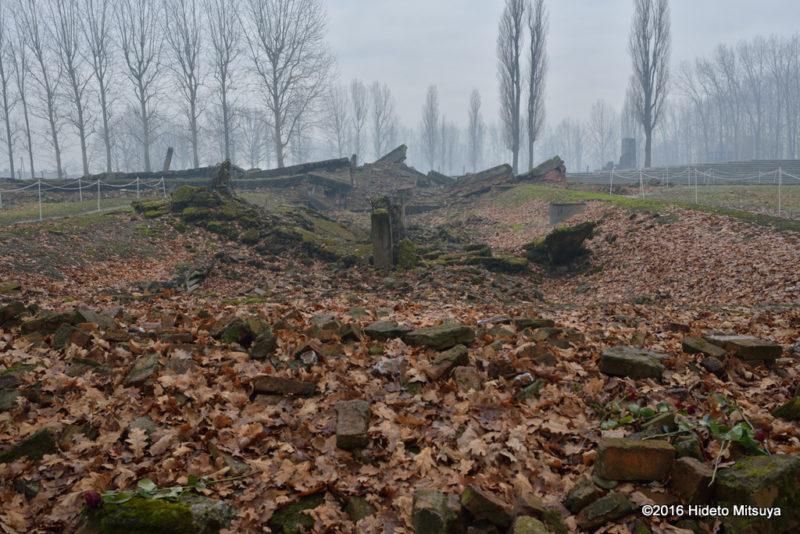 ビルケナウ第二強制収容所クレマトリウム(ガス室)の廃墟2