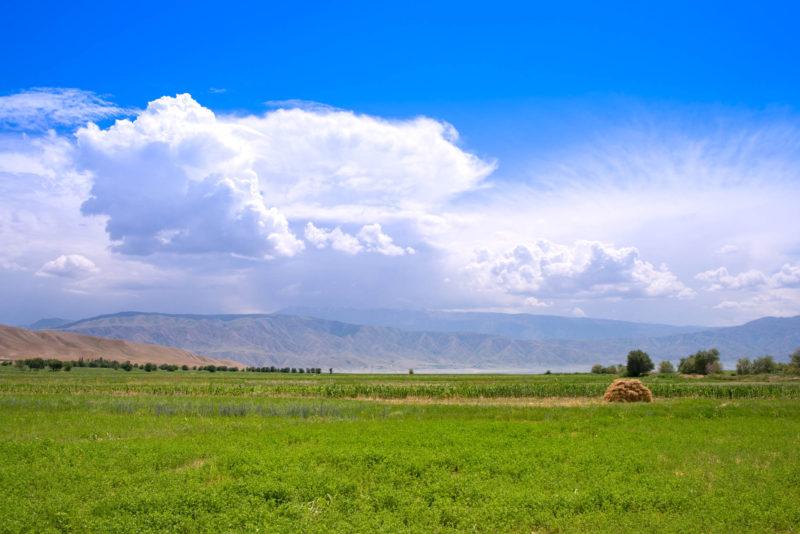 トクトグルの草原