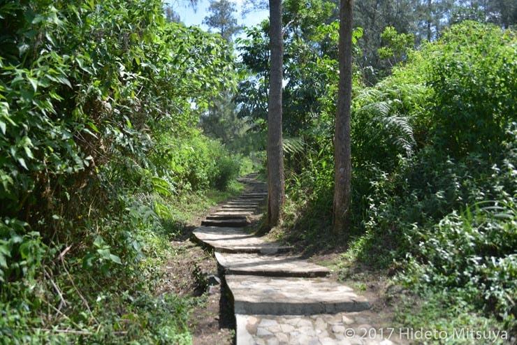 クリムトゥ山か公庫に通じる道