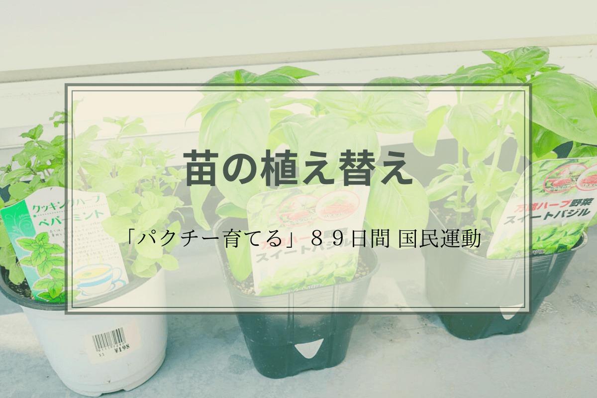 苗を植え替えアイキャッチ